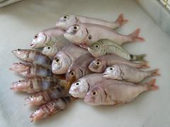 pescado photo